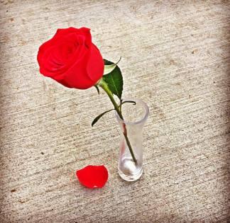 rose-in-a-vase-on-a-sidewalk